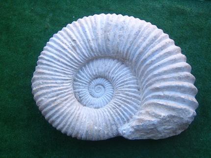 fosil1.jpg