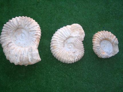 fosil2.jpg